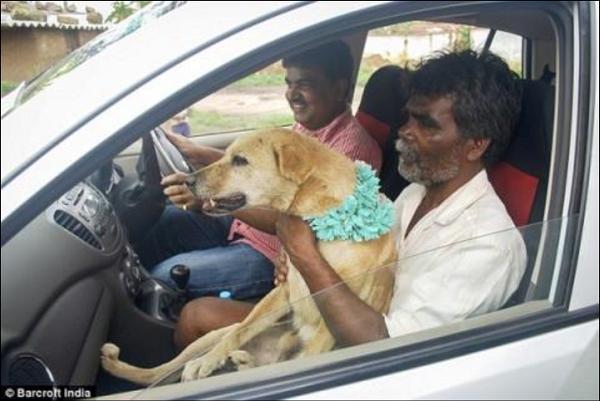 Phong tục kỳ lạ: Người kết hôn với thú cưng để xua đuổi tà ma - Ảnh 2