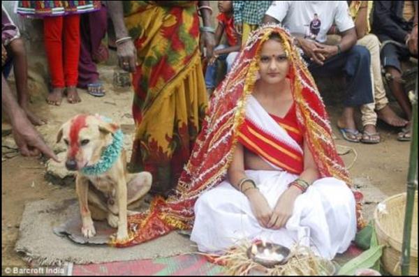 Phong tục kỳ lạ: Người kết hôn với thú cưng để xua đuổi tà ma - Ảnh 1