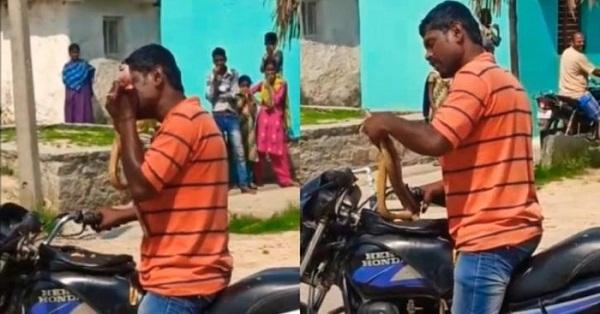 Cả gan cản đường xe máy, con rắn bị người đàn ông cắn xé thành nhiều mảnh - Ảnh 1