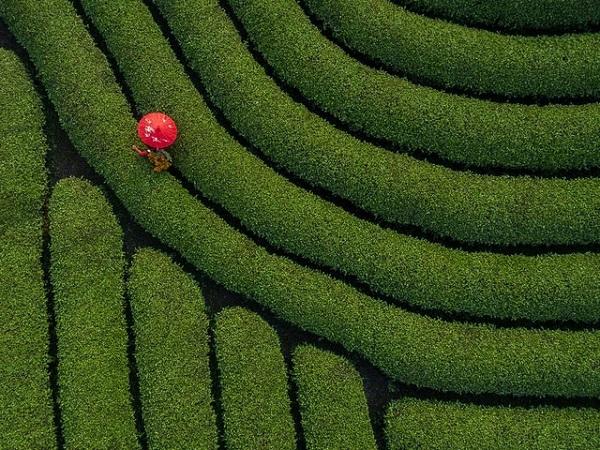 """Nhiếp ảnh gia Việt Nam gây """"sửng sốt"""" tại giải ảnh quốc tế - Ảnh 2"""