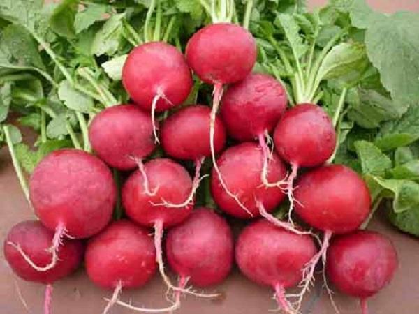 Chăm chỉ bổ sung những thực phẩm này mỗi ngày, gan tự thải độc, cơ thể khỏe lên trông thấy - Ảnh 5