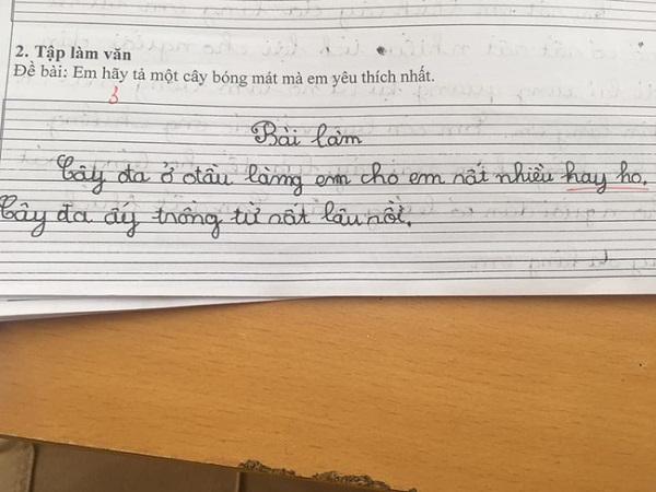 """Cười """"té ghế"""" với loạt bài văn tả cây yêu thích của học sinh lớp 1 - Ảnh 4"""