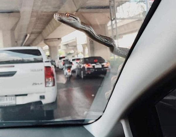 """Đang chạy xe trên đường, tài xế ô tô xanh mặt khi thấy """"bé Na"""" nhòm qua kính - Ảnh 1"""
