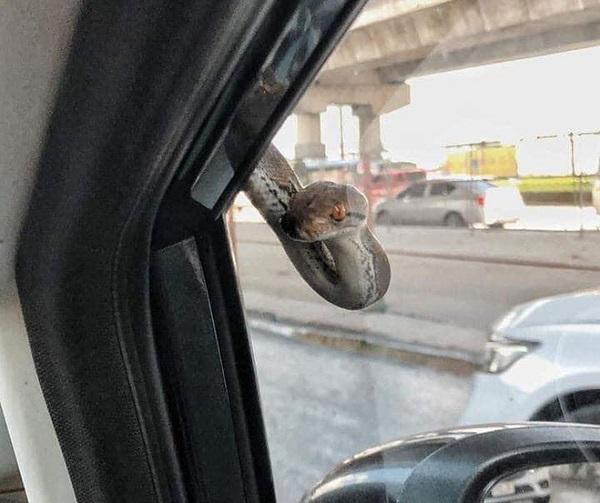 """Đang chạy xe trên đường, tài xế ô tô xanh mặt khi thấy """"bé Na"""" nhòm qua kính - Ảnh 2"""