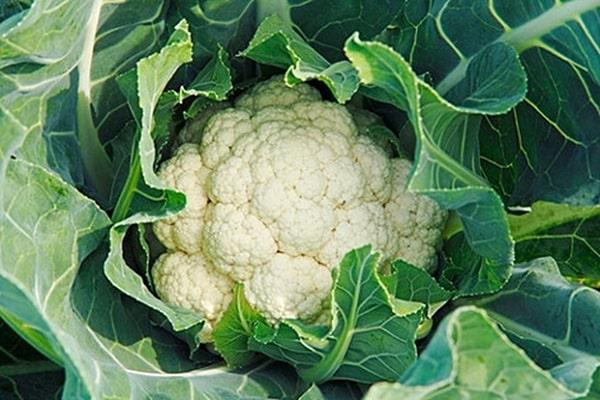 """6 loại rau củ được coi là """"tổ"""" của ký sinh trùng, rửa kỹ kẻo """"nuôi lớn"""" mầm bệnh trong người - Ảnh 3"""
