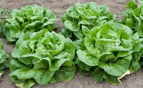 """6 loại rau củ được coi là """"tổ"""" của ký sinh trùng, rửa kỹ kẻo """"nuôi lớn"""" mầm bệnh trong người - Ảnh 6"""