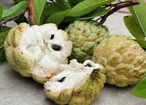 """5 loại quả thơm ngon nhưng hạt lại là """"thuốc độc"""", chớ dại đụng đến nếu không muốn chết sớm - Ảnh 5"""