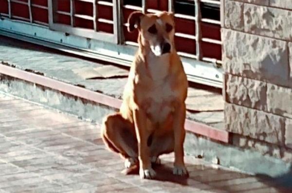 """Kỳ lạ hình ảnh """"nàng"""" chó ngồi suốt một tuần ngoài hiệu sách, hỏi ra mới biết sự thật đau lòng - Ảnh 1"""