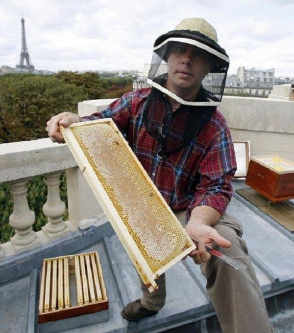 Gần 200.000 chú ong sống sót kì diệu sau vụ cháy Nhà thờ Đức Bà Paris - Ảnh 2