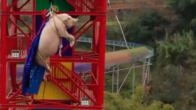 Trung Quốc: Bắt lợn sống nhảy từ độ cao gần 70m để mua vui gây phẫn nộ - Ảnh 1