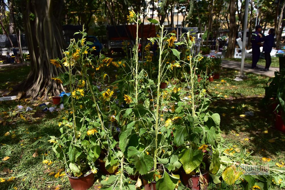 Tiểu thương xé nát hoa khi giảm giá xuống 5.000 đồng/chậu mà vẫn không có người mua - Ảnh 6