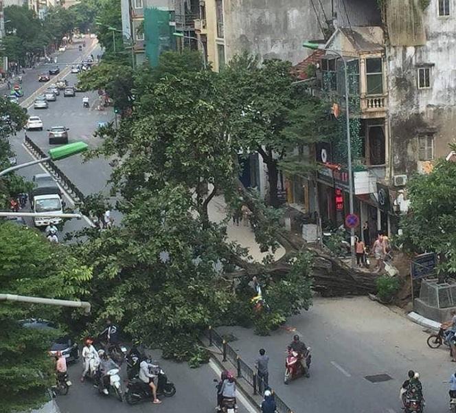 Hà Nội: Cây đa cổ thụ bất ngờ bật gốc, đổ chắn ngang đường làm giao thông tê liệt - Ảnh 1