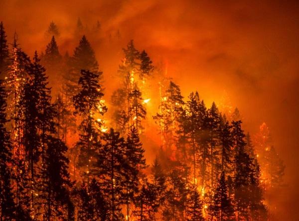Lỡ nghịch dại, thiếu niên 15 tuổi nhận án phạt 37 triệu USD vì gây cháy rừng kinh hoàng - Ảnh 3