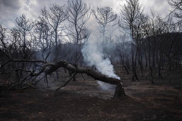 """Hy Lạp: Cận cảnh """"quỷ lửa"""" nuốt trọn gần 100 ngôi nhà, ít nhất 74 người chết - Ảnh 19"""