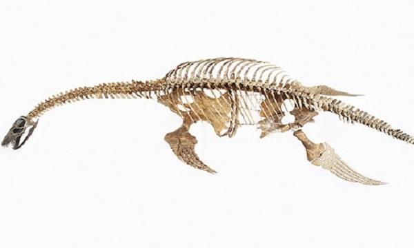 3 quái vật khổng lồ thời tiền sử có thể vẫn sống sót tới ngày nay - Ảnh 6