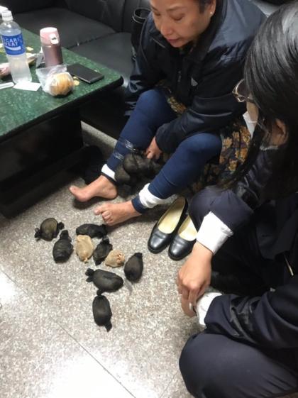 Bắt quả tang người phụ nữ giấu 24 con chuột nhảy trong váy - Ảnh 1