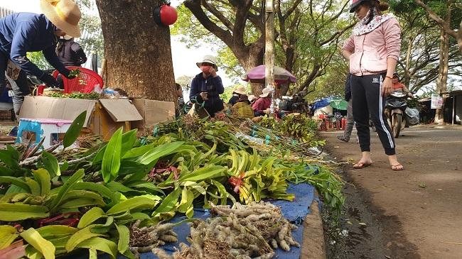 """Chợ lan rừng nhộn nhịp """"đón Tết"""", người dân đổ xô tận diệt loài hoa quý - Ảnh 2"""
