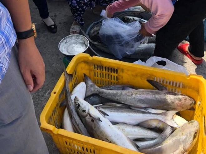 Kiên Giang: Hàng chục tấn cá lồng bè chết ồ ạt không rõ nguyên nhân - Ảnh 1