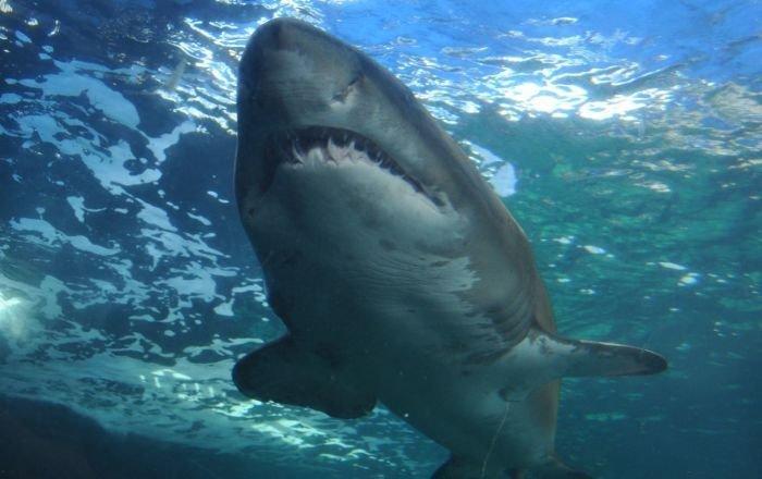 Phát hiện các phần thi thể người trong bụng cá mập ở Ấn Độ Dương, nghi liên quan tới vụ mất tích bí ẩn - Ảnh 1