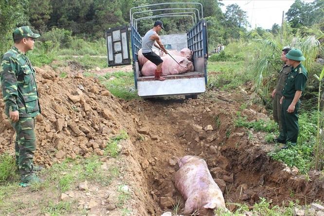 Nóng: Phát hiện 2 ổ dịch tả lợn châu Phi tại Việt Nam - Ảnh 2