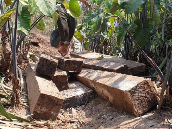 Bắt tạm giam các đối tượng phá rừng tại Vườn quốc gia Phong Nha - Kẻ Bàng - Ảnh 1