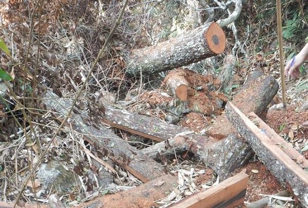 Bắt tạm giam các đối tượng phá rừng tại Vườn quốc gia Phong Nha - Kẻ Bàng - Ảnh 2