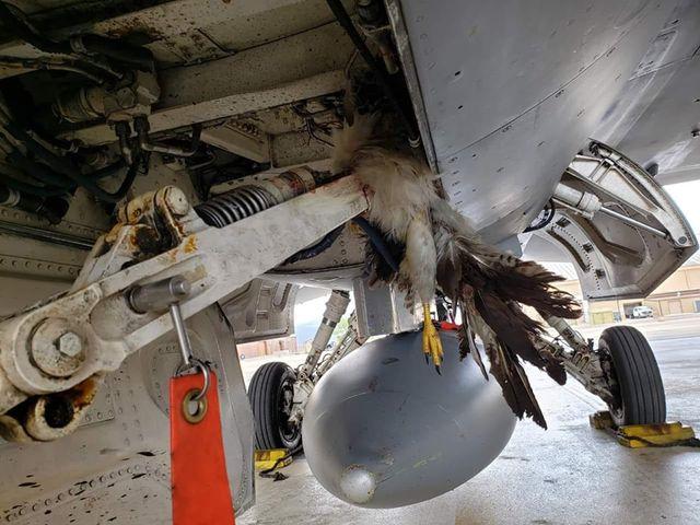 Máy bay chiến đấu thế hệ 5 của Mỹ đâm phải chim, thiệt hại hàng triệu USD - Ảnh 1