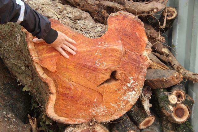 Hà Nội: Sắp bán đấu giá hơn 5 tấn gỗ sưa, ước tính hàng chục triệu đồng mỗi kg - Ảnh 1