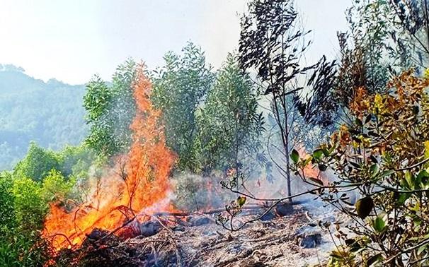 Hiện trường vụ cháy rừng kinh hoàng tại Nghệ An, gần 1000 người căng mình dập lửa - Ảnh 1