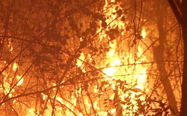 Hiện trường vụ cháy rừng kinh hoàng tại Nghệ An, gần 1000 người căng mình dập lửa - Ảnh 2