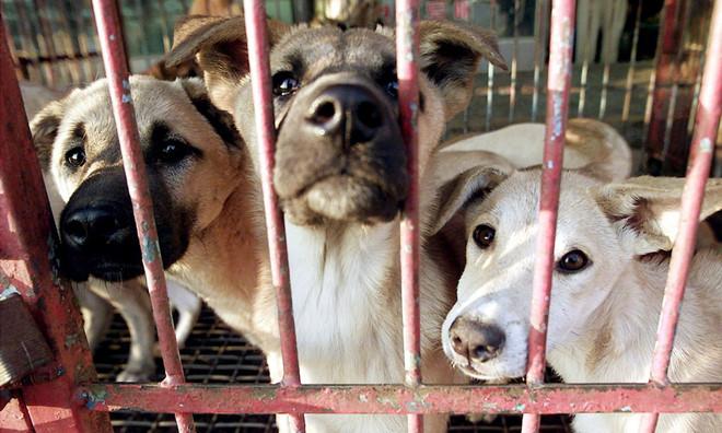 Khu chợ lớn chuyên bán thịt chó tại Hàn Quốc chính thức đóng cửa - Ảnh 2