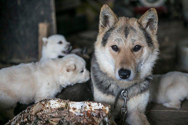Khu chợ lớn chuyên bán thịt chó tại Hàn Quốc chính thức đóng cửa - Ảnh 1