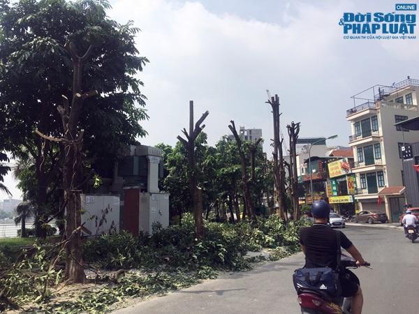 Hà Nội chuyển 100 cây hoa sữa lên bãi rác Nam Sơn: Người dân Tây Hồ nói gì? - Ảnh 1