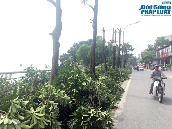 Hà Nội chuyển 100 cây hoa sữa lên bãi rác Nam Sơn: Người dân Tây Hồ nói gì? - Ảnh 2