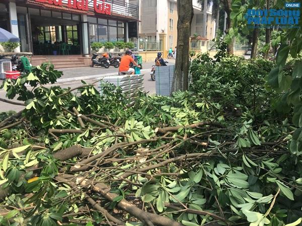 Hà Nội chuyển 100 cây hoa sữa lên bãi rác Nam Sơn: Người dân Tây Hồ nói gì? - Ảnh 4