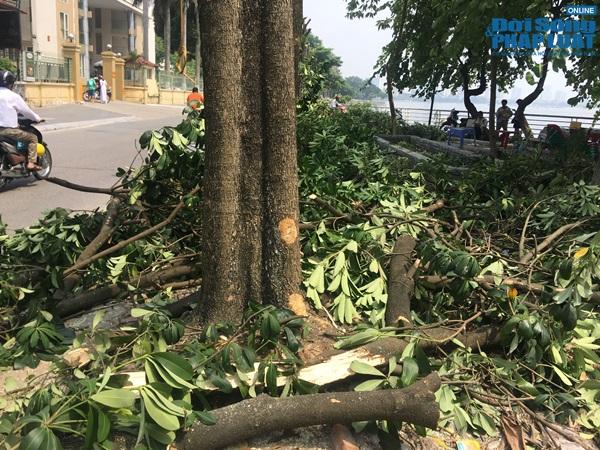 Hà Nội chuyển 100 cây hoa sữa lên bãi rác Nam Sơn: Người dân Tây Hồ nói gì? - Ảnh 5