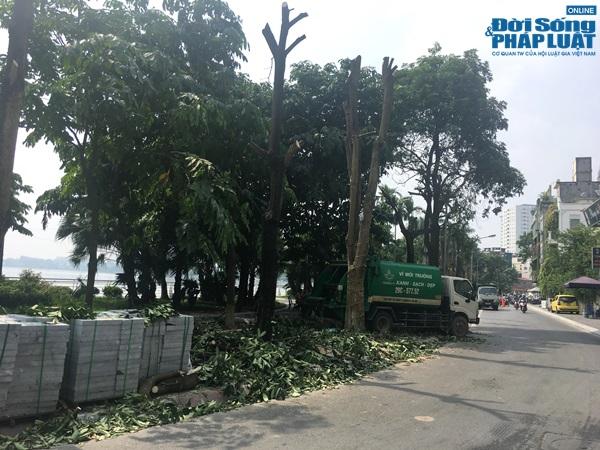 Hà Nội chuyển 100 cây hoa sữa lên bãi rác Nam Sơn: Người dân Tây Hồ nói gì? - Ảnh 6