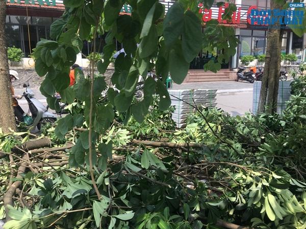 Hà Nội chuyển 100 cây hoa sữa lên bãi rác Nam Sơn: Người dân Tây Hồ nói gì? - Ảnh 7