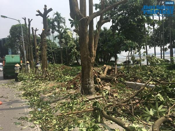 Hà Nội chuyển 100 cây hoa sữa lên bãi rác Nam Sơn: Người dân Tây Hồ nói gì? - Ảnh 8