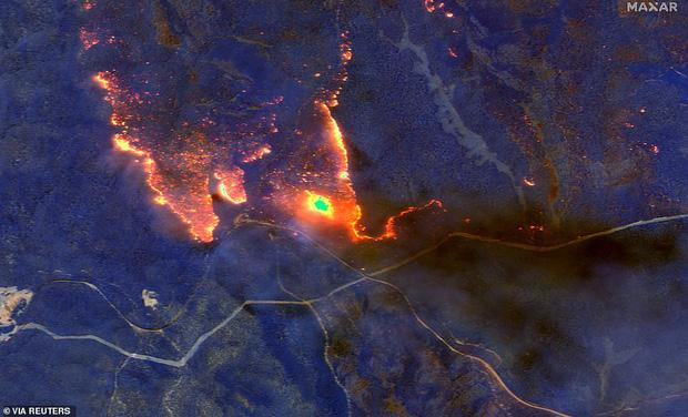 Những hình ảnh khiến người xem rớt nước mắt trong đại thảm họa cháy rừng ở Australia - Ảnh 2