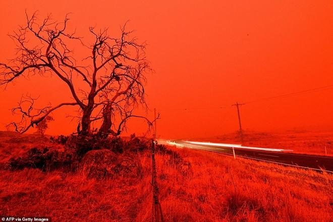 Những hình ảnh khiến người xem rớt nước mắt trong đại thảm họa cháy rừng ở Australia - Ảnh 5