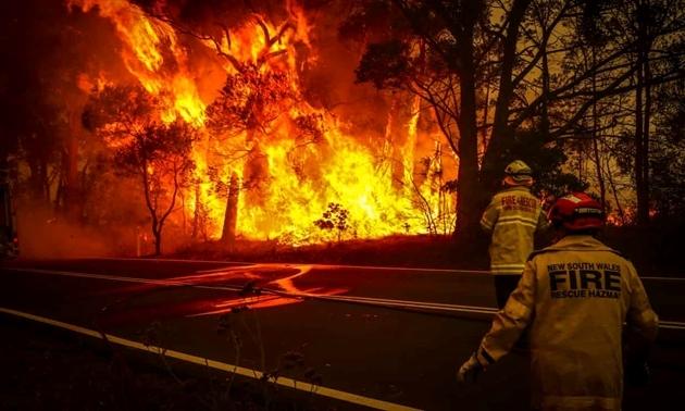 Những hình ảnh khiến người xem rớt nước mắt trong đại thảm họa cháy rừng ở Australia - Ảnh 9