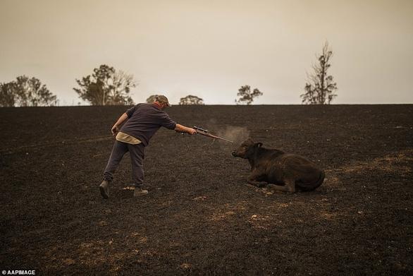 Những hình ảnh khiến người xem rớt nước mắt trong đại thảm họa cháy rừng ở Australia - Ảnh 12