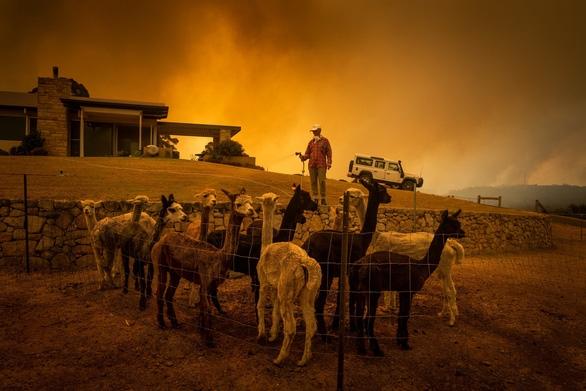 Những hình ảnh khiến người xem rớt nước mắt trong đại thảm họa cháy rừng ở Australia - Ảnh 13