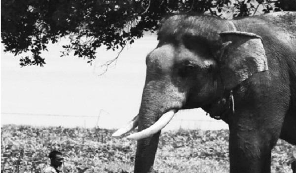 Voi húc chết người chăm sóc: Đã đến lúc dừng sử dụng động vật hoang dã phục vụ thương mại - Ảnh 1