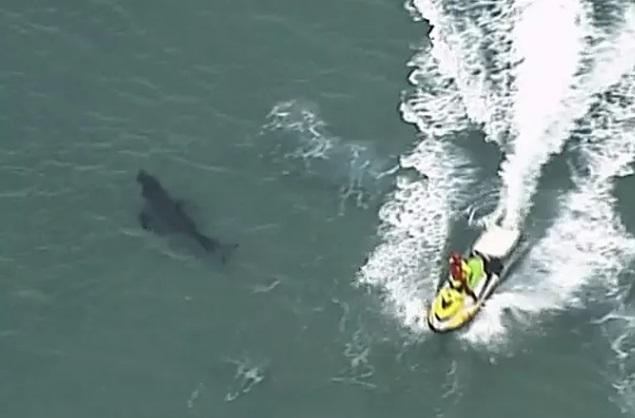 Bị cá mập trắng khổng lồ tấn công, người đàn ông 60 tuổi tử vong thương tâm - Ảnh 1