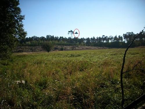 Đĩa bay UFO xuất hiện giữa ban ngày ở Ba Lan - Ảnh 1