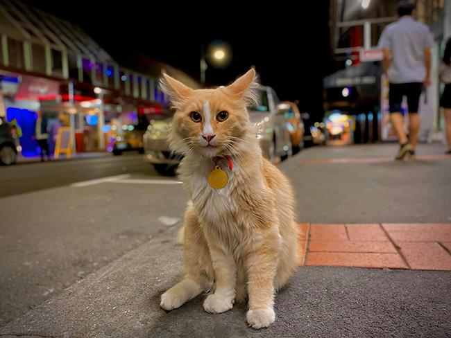 """Chú mèo được đề cử giải """"Gương mặt của năm"""", cạnh tranh với Thủ tướng New Zealand  - Ảnh 1"""