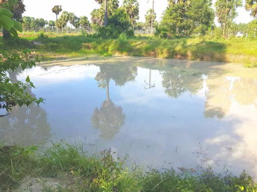 An Giang: Rủ nhau tắm ở hồ sau vườn, 5 em nhỏ đuối nước tử vong - Ảnh 1