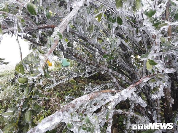 Ngắm những đồ vật như hóa thạch ở Bắc Cực trên đỉnh Mẫu Sơn trong đợt băng tuyết đầu tiên - Ảnh 3